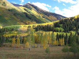 Fall Colors on Maroon Creek Rd.